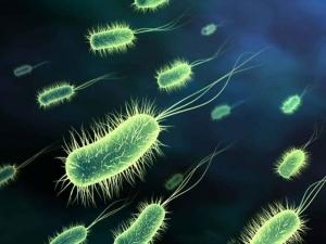 micro-organism