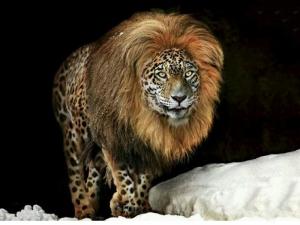 rare animals
